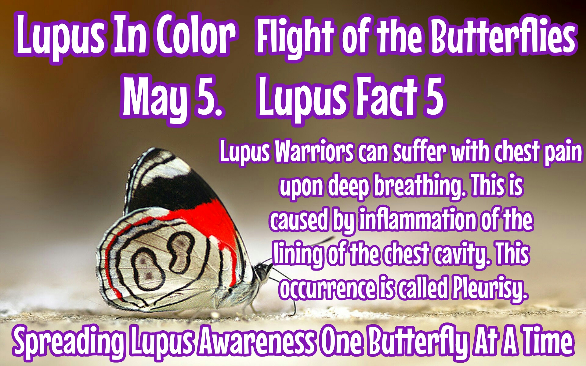 Butterflies of hope page 9 lupus in color image biocorpaavc Image collections
